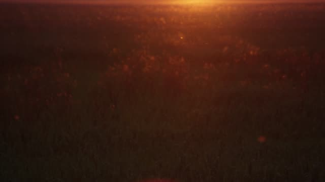 reeds backlit by setting sun - pollen grain stock videos & royalty-free footage