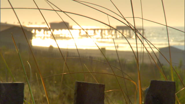 reeds behind fencing w/ atlantic ocean & pier soft bg, sunlight reflecting white-blue. surreal. - orange new jersey stock videos & royalty-free footage