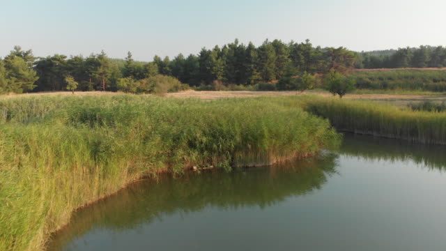 stockvideo's en b-roll-footage met riet in een lake sakli göl (hidden lake of marsh), honaz, denizli, turkije - natuurwonder