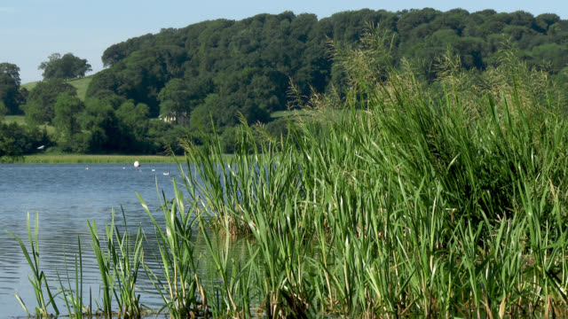 reeds in a loch blowing in the wind - johnfscott stock videos and b-roll footage