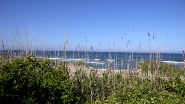 reeds in front of ocean - marram grass stock videos & royalty-free footage