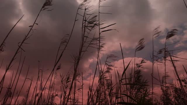 stockvideo's en b-roll-footage met reeds in the winds - twijg