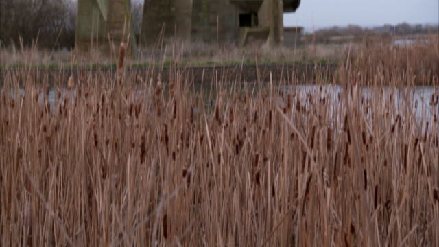 reeds rustle in the breeze near concrete acoustic mirrors in denge, england. available in hd. - bulrush stock videos & royalty-free footage
