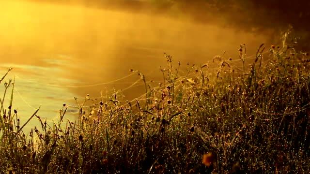 vídeos de stock e filmes b-roll de pentes, teia de aranha e nevoeiro sobre o lago - criação animal