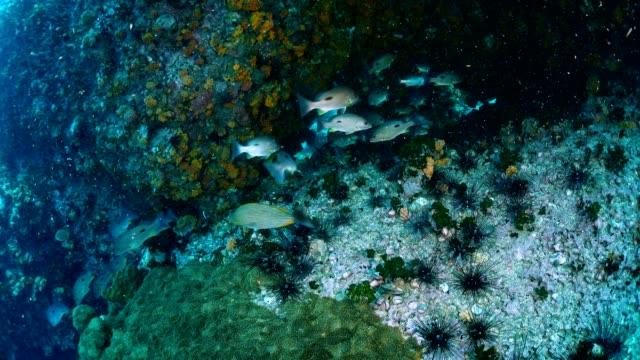 Riff und Marine Leben in Chumphon Tauchen Stie, Thailand