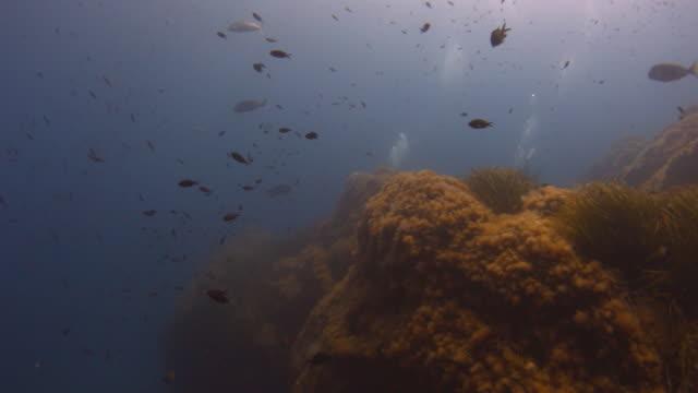 vidéos et rushes de reef and sea life - vincent pommeyrol