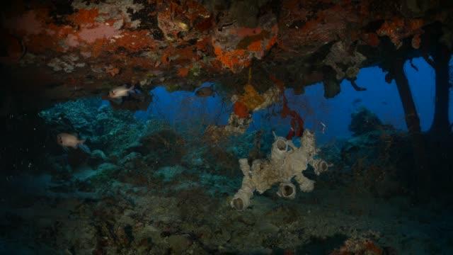 stockvideo's en b-roll-footage met rifvissen en koraal onder zee vliegtuig wrak - scheepswrak