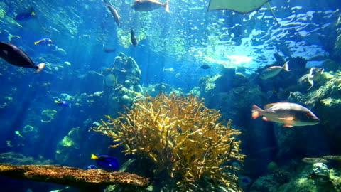 reef - hd video - sea life stock videos & royalty-free footage