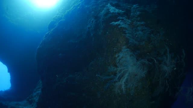 vídeos y material grabado en eventos de stock de arrecife en la caverna submarina, palau - deep sea diving
