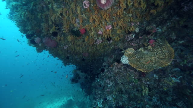A reef ledge covered in soft corals