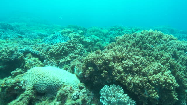 Reef of hard corals and leather corals.