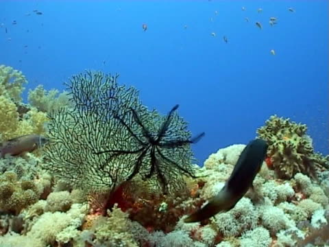 reef seascape close up to wide shot - medium group of animals stock videos & royalty-free footage