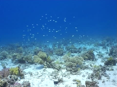 reef seascape wide shot small fish above reef - medium group of animals stock videos & royalty-free footage
