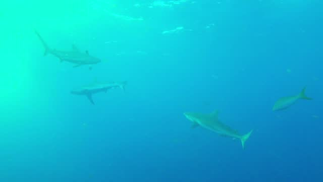reef sharks are scavengers and are not usually much of a real threat to scuba divers. they don't usually attack unless provoked or threatened. even... - aqualung diving equipment stock videos & royalty-free footage