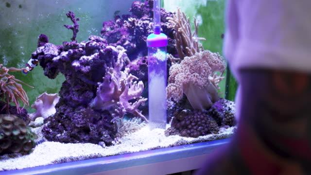 reef tank maintenance - aquarium stock videos & royalty-free footage