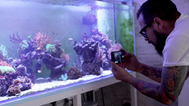 reef tank maintenance - aquarium stock videos & royalty-free footage