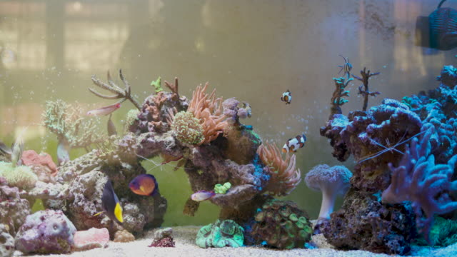 reef tank - saltwater fish stock videos & royalty-free footage