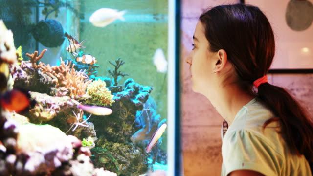 reef tank - aquarium stock videos & royalty-free footage