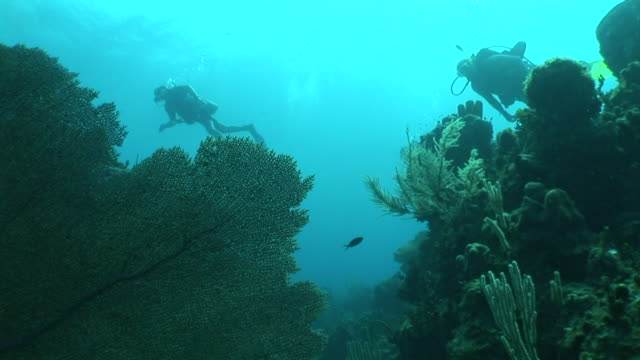 small group of scuba divers slowly swimming by, murky bg. hidden, hiding, observing, watching, spying, following, creepy, predator, waiting. - soft coral stock videos & royalty-free footage
