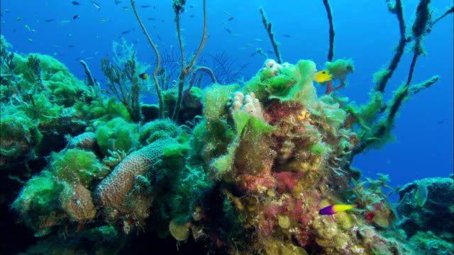 reef, tunicate, algae. eleuthera, bahamas, north atlantic ocean  - north atlantic ocean stock videos & royalty-free footage