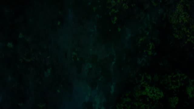 riff unter wasser aus küstengewässern von maui - koralle nesseltier stock-videos und b-roll-filmmaterial