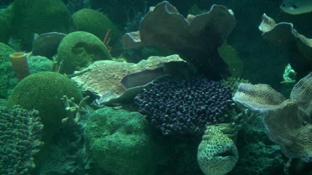 vídeos y material grabado en eventos de stock de arrecife - cnidario