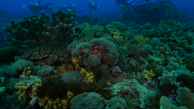 Reef with soft and hard coral, Green Island, Taiwan