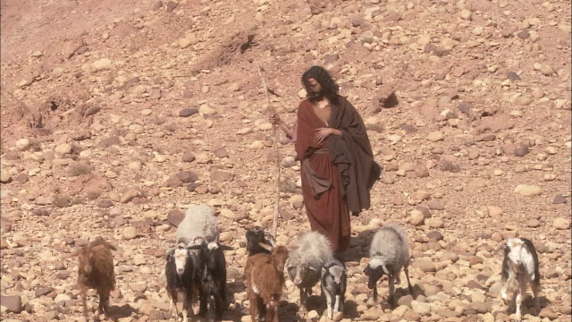 a reenactment depicts a shepherd herding sheep and goats. - hüten stock-videos und b-roll-filmmaterial