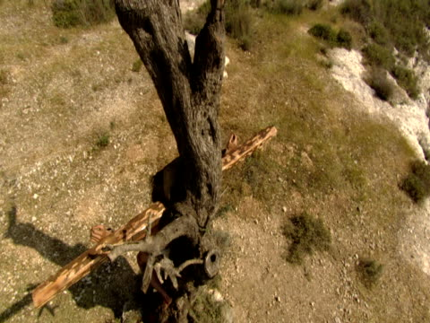 stockvideo's en b-roll-footage met a re-enactment of the crucifixion of christ - mid volwassen mannen