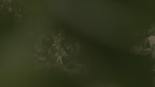 reeve's muntjac fawn adn doe - adn bildbanksvideor och videomaterial från bakom kulisserna