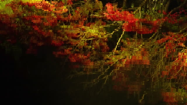 vídeos de stock e filmes b-roll de refections of autumn leaves at nabana no sato, mie, japan - ácer