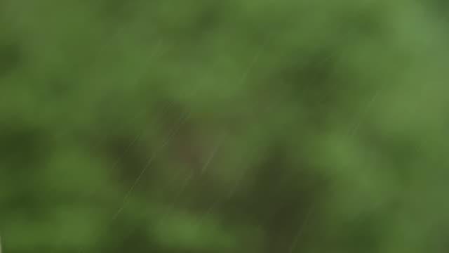 vídeos y material grabado en eventos de stock de slo mo ms referee showing yellow card on field to professional soccer player arguing call - árbitro