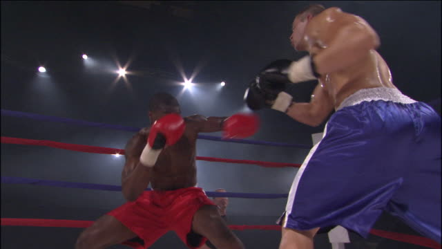 la ms referee starting fight, then two boxers fight in ring while trainers watches ringside / jacksonville, florida, usa - 上半身裸点の映像素材/bロール