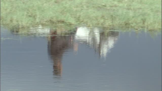 Reflection in water of men on horseback, Bayanbulak grasslands.