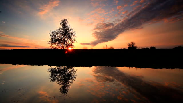 reflection of a beautiful sky in the lake at dawn - single tree stock videos & royalty-free footage