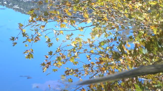 Reflexion der Blätter im Herbst