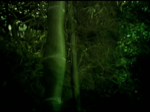 Reflection of Bamboo on glittering water surface (NTSC video)