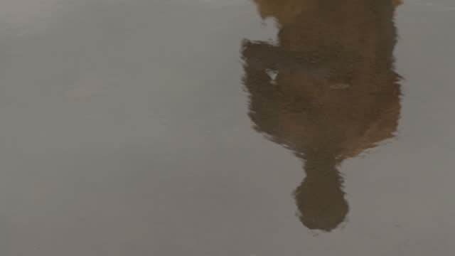 reflection of monk as he walks through puddle, sri lanka. - sri lankan culture stock videos & royalty-free footage