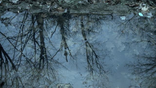 vídeos de stock, filmes e b-roll de slo mo cu reflection of person running by puddle in woods, morrisville, vermont, usa - tensão de superfície