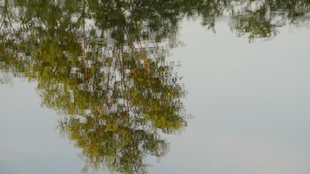 vídeos de stock, filmes e b-roll de reflexo de árvore. - movimento perpétuo