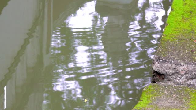 vídeos de stock, filmes e b-roll de 4 reflexão k de água no parque - lago reflection