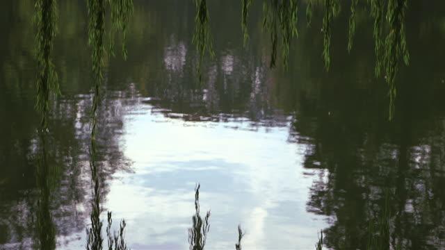 reflektion in the lake - pan - trauerweide stock-videos und b-roll-filmmaterial