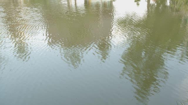 reflex on the water