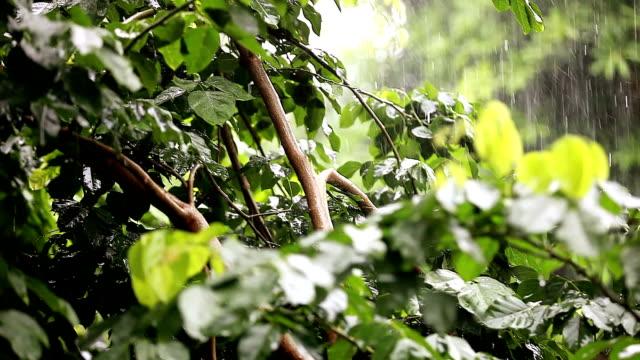 refreshing rain in nature - monsoon stock videos & royalty-free footage