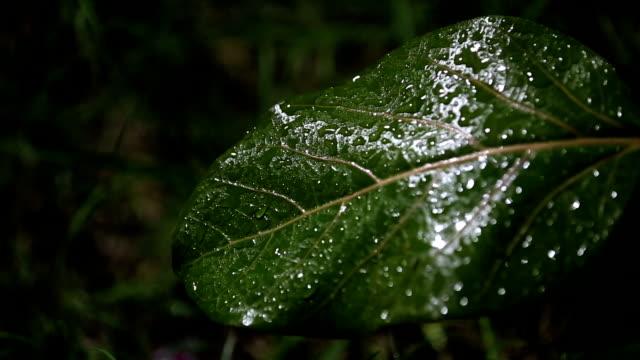 refreshment rain - raindrop stock videos & royalty-free footage