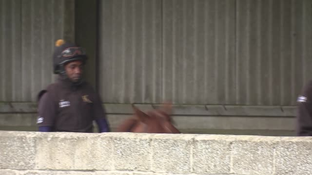 refugee and aspiring jockey working at racehorse stables england berkshire newbury kingsclere stables ext various of abdulkareem musa adam tending to... - all horse riding stock videos & royalty-free footage