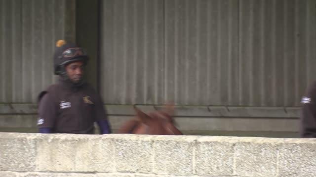refugee and aspiring jockey working at racehorse stables; england: berkshire: newbury: kingsclere stables: ext various of abdulkareem musa adam... - newbury england stock videos & royalty-free footage