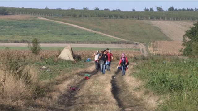 refugees walk towards the serbia's border town sid to cross croatian border after hungarian authorities closed their border on september 18 2015... - traditionally hungarian stock videos & royalty-free footage