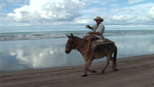 ms pov regional man riding on  his donkey at brazilian northeast coast / rio grande do norte, brasil - donkey stock videos & royalty-free footage