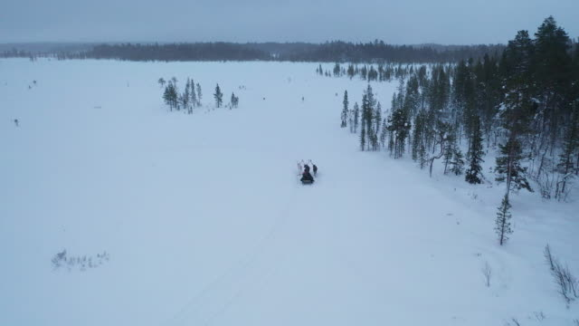 reindeer sledding on deep snow forest in winter season - canine stock videos & royalty-free footage